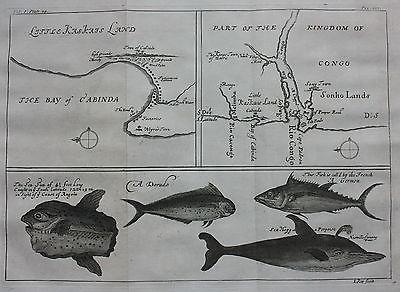 Original antique map AFRICA, CONGO, ANGOLA, CABINDA BAY, FISH, Barbot, Kip, 1744