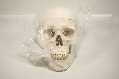 3B Scientific Plastic Human Skull Model, 3 Parts, 7.9