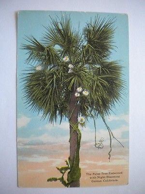 Postcard Palm Tree Entwined with Night Blooming Cereus Californis Unused