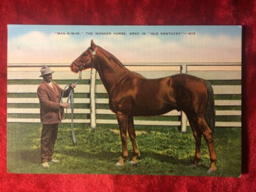 1936 Post Card, Man-o-War, 'Bred in Old Kentucky, Unused Kentucky Derby Winner