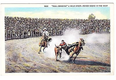 BULL-DOGGING A WILD STEER  RODEO POSTCARD
