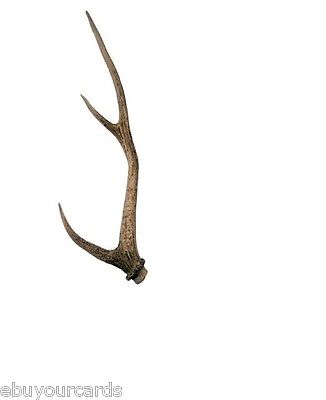 The Walking Dead Deer Antlers Production Screen Used Show Props COA AMC