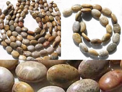 Fossilized CORAL Oval Focal Bead STRAND 108970