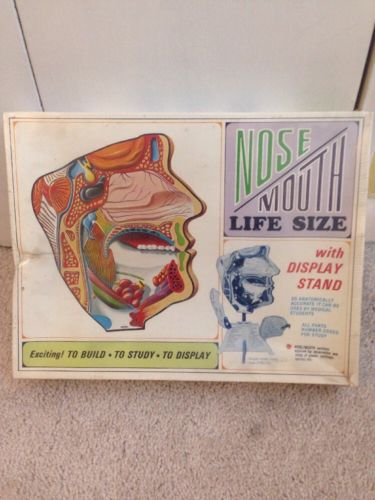 Vintage Pyro Nose Mouth Life Size Model Kit Sealed in Original Plastic Medical