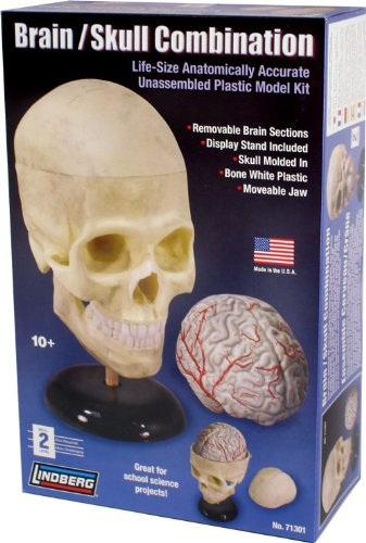 Lindberg Human Brain and Skull Combination