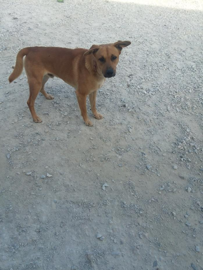 Adopt Charlie a Coonhound