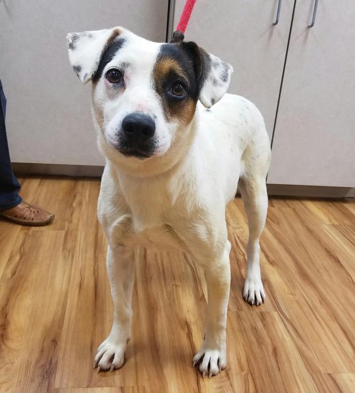 Adopt Jill a Terrier, Beagle