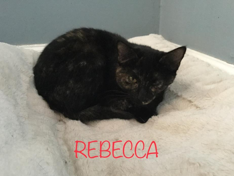 Adopt Rebecca a Tortoiseshell
