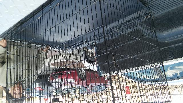 Large Dog Crate Pen