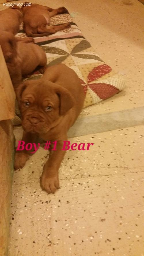 Boy #1 Bear