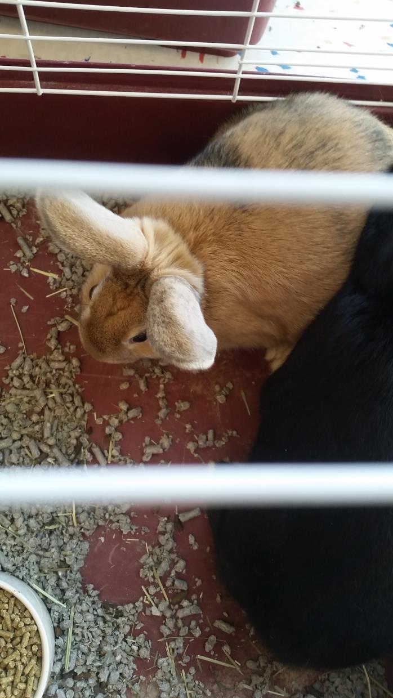 Adopt Kendal a Bunny Rabbit