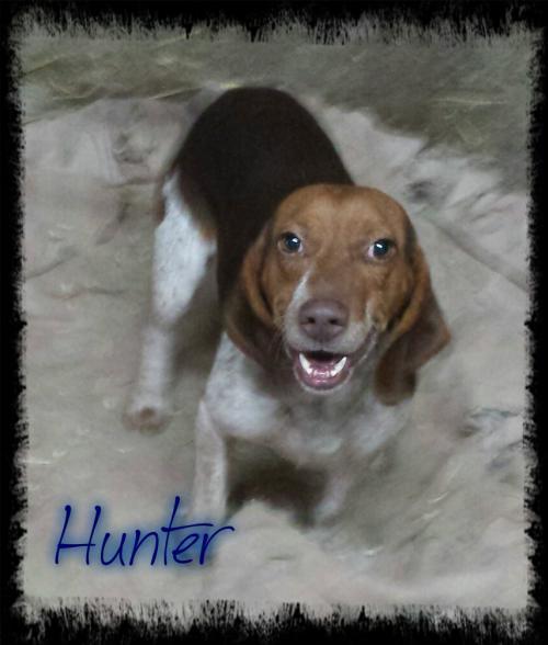 Adopt Hunter a Hound