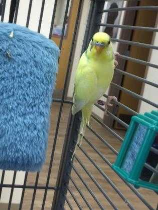 Adopt Oscar a Yellow Other/Unknown / Other/Unknown / Mixed bird in Eagle