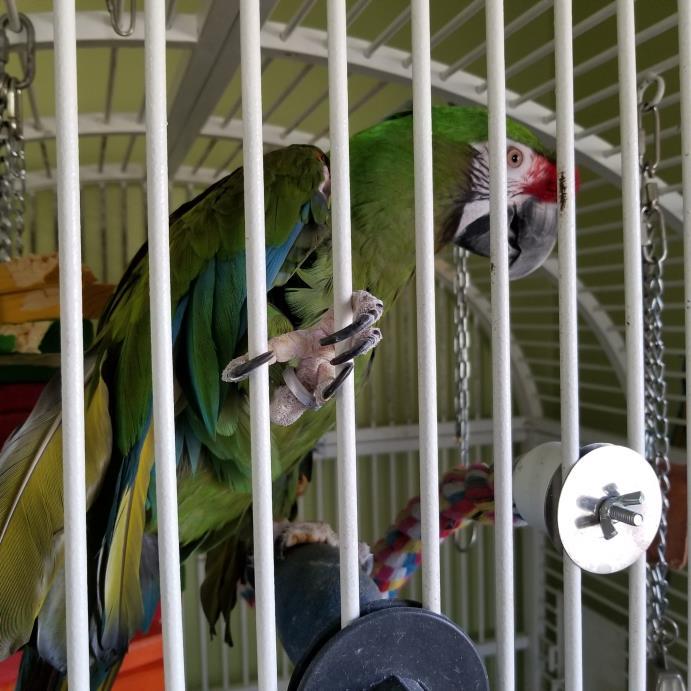 Adopt Lou a Macaw