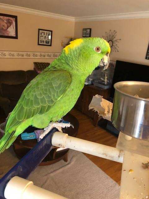 Adopt Rocky a Amazon