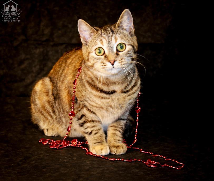 Adopt Ester cr5 a Tabby
