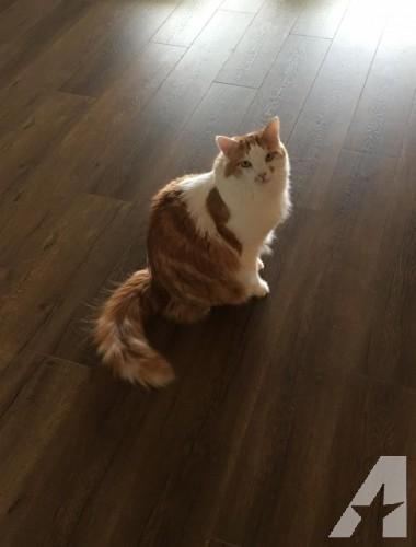 Indoor Cat needs good home