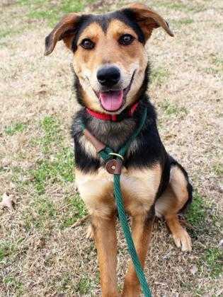 Adopt Sadie a Black Mixed Breed (Medium) / Mixed dog in Atlanta, GA (20050116)