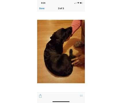 Selling dog