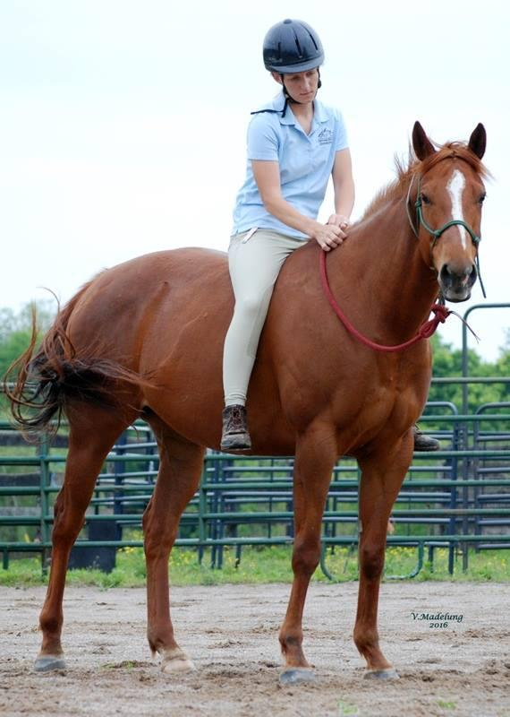 Adopt Godiva a Thoroughbred