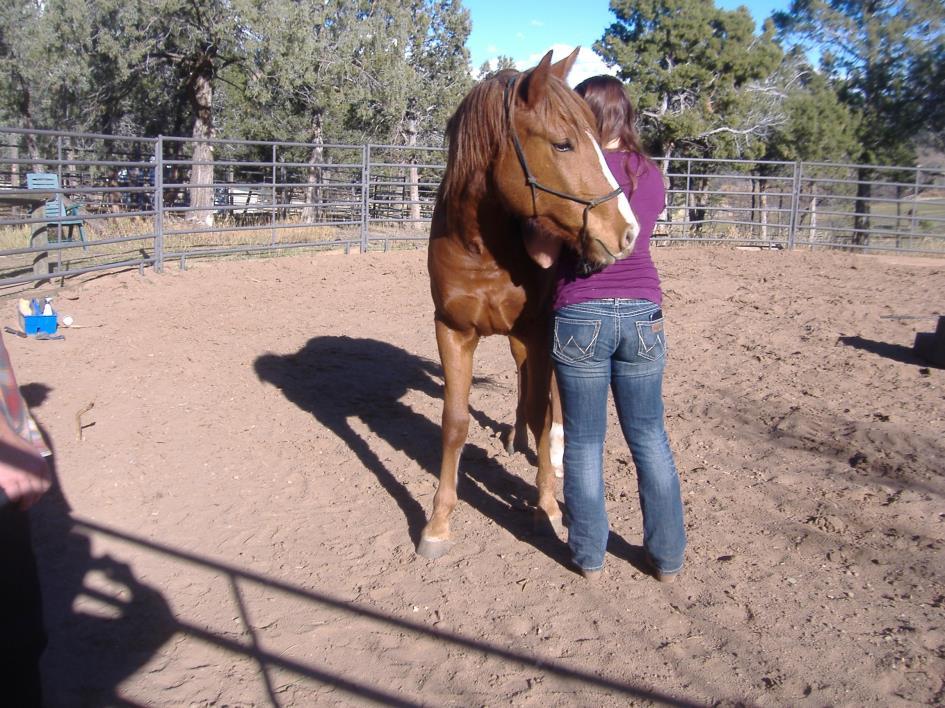 Adopt Sedona a Chestnut/Sorrel Quarterhorse / Draft horse in Durango