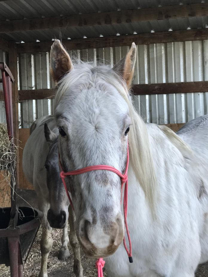 Adopt De'ago a Appaloosa, Quarterhorse