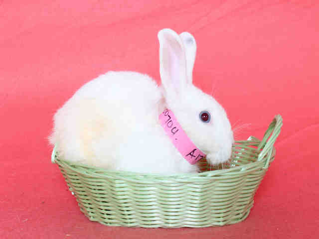 Adopt BUN a Bunny Rabbit