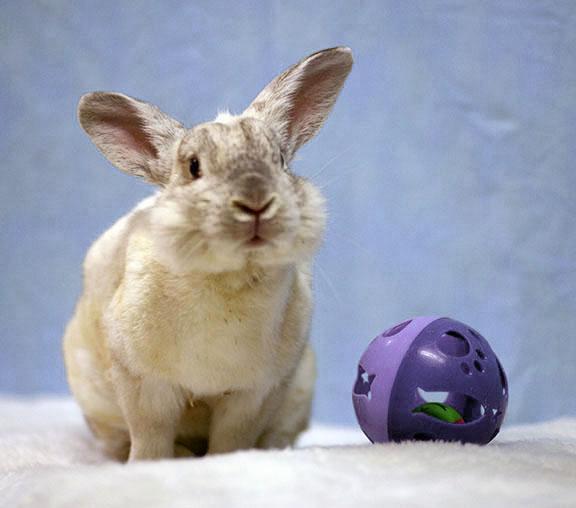 Adopt Spidey a Bunny Rabbit