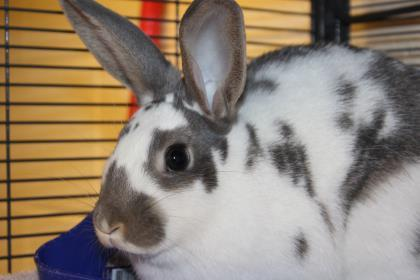 Adopt Daisy a Bunny Rabbit