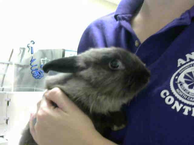Adopt A282894 a Bunny Rabbit