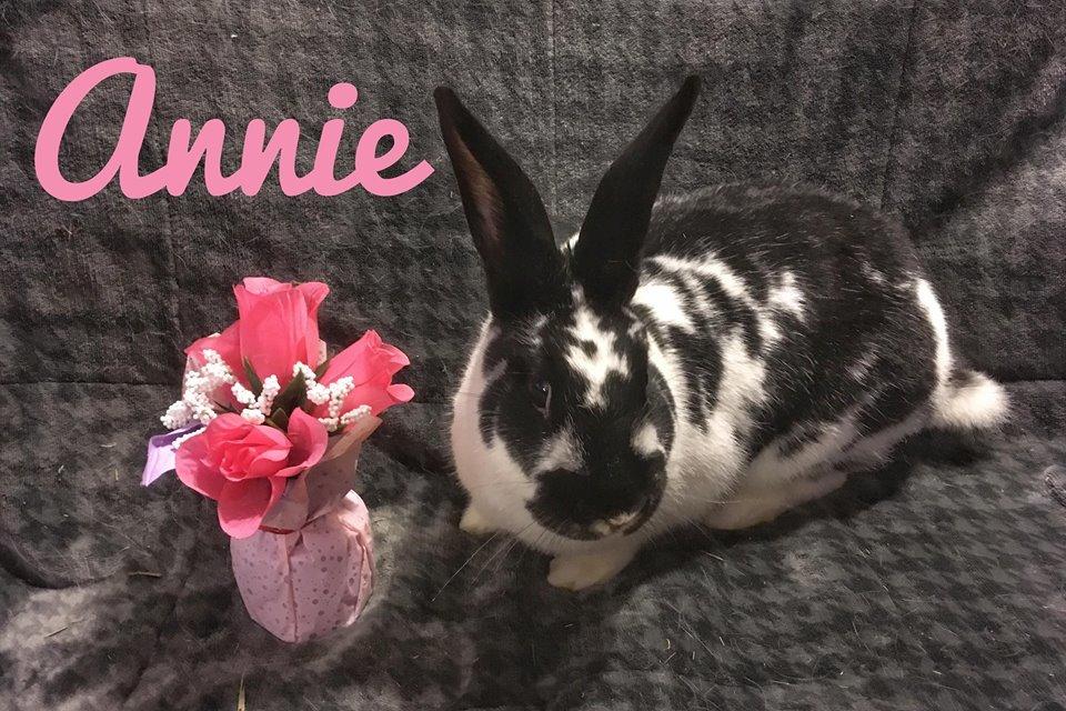 Adopt Annie a English Spot
