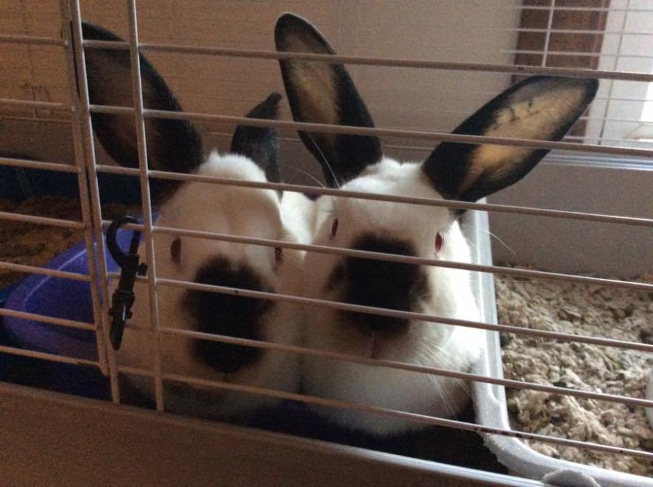 Adopt Laverne and Shirley a Californian