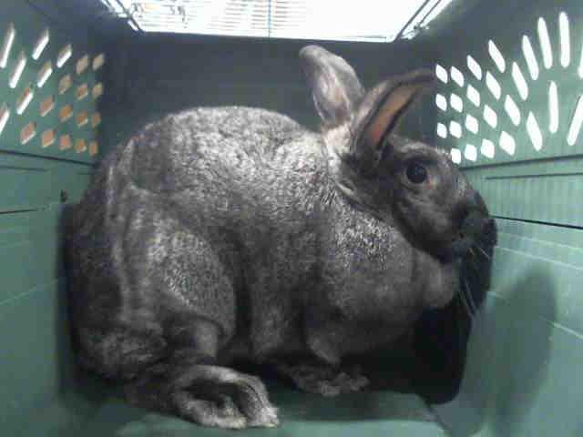 Adopt ELEVEN a Bunny Rabbit