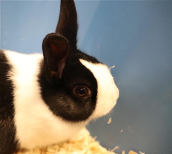 Adopt Melanie a Bunny Rabbit