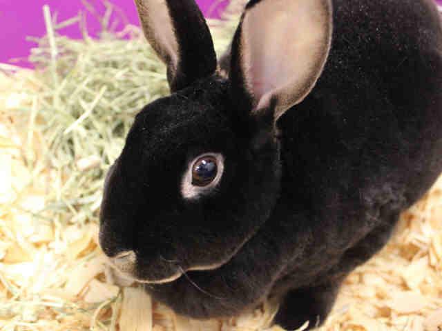 Adopt WINNY a Bunny Rabbit