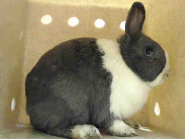 Adopt MINNIE a Bunny Rabbit