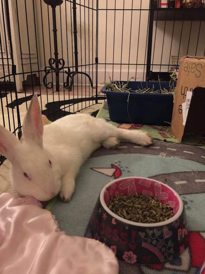 Adopt Toby a Bunny Rabbit