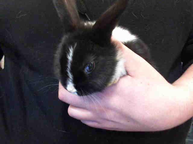 Adopt BOOP a Bunny Rabbit