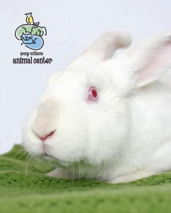 Adopt Bunnicula a Bunny Rabbit