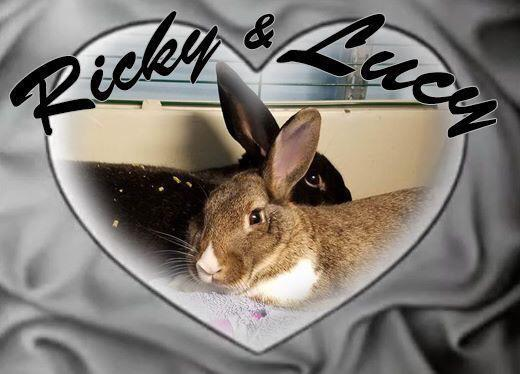 Adopt Ricky, Lucy a Bunny Rabbit