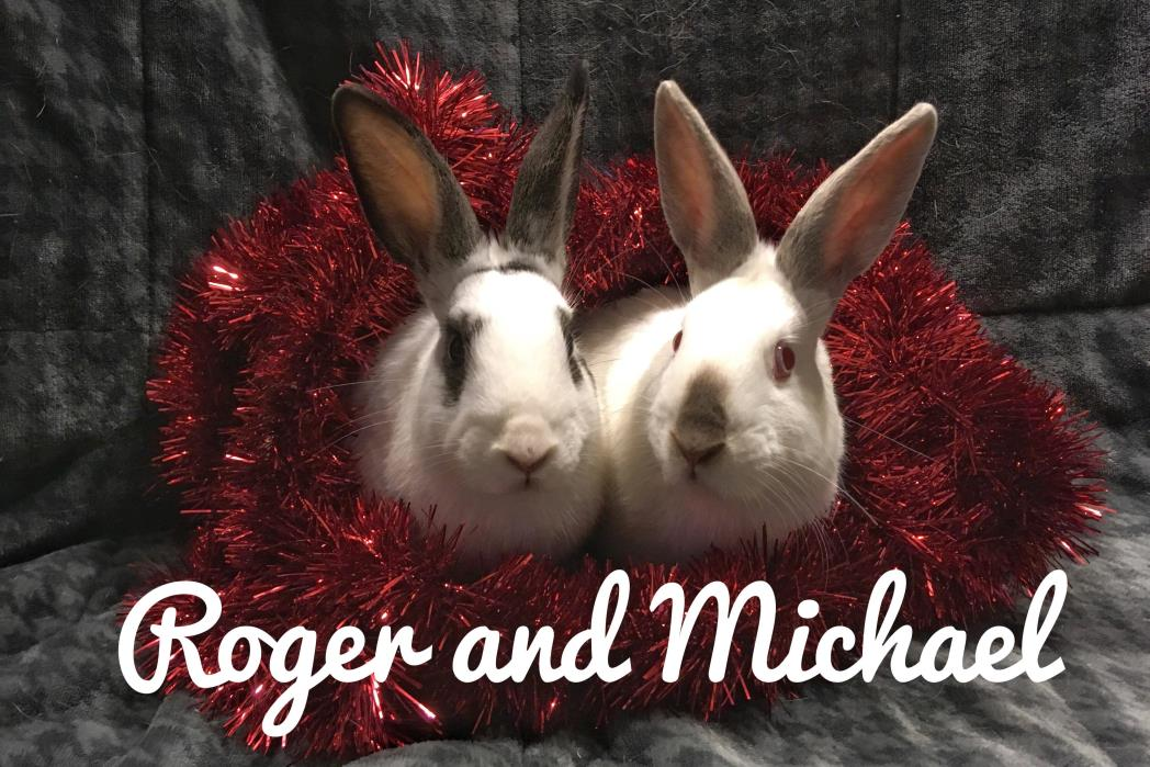 Adopt Michael and Roger a Florida White, Californian