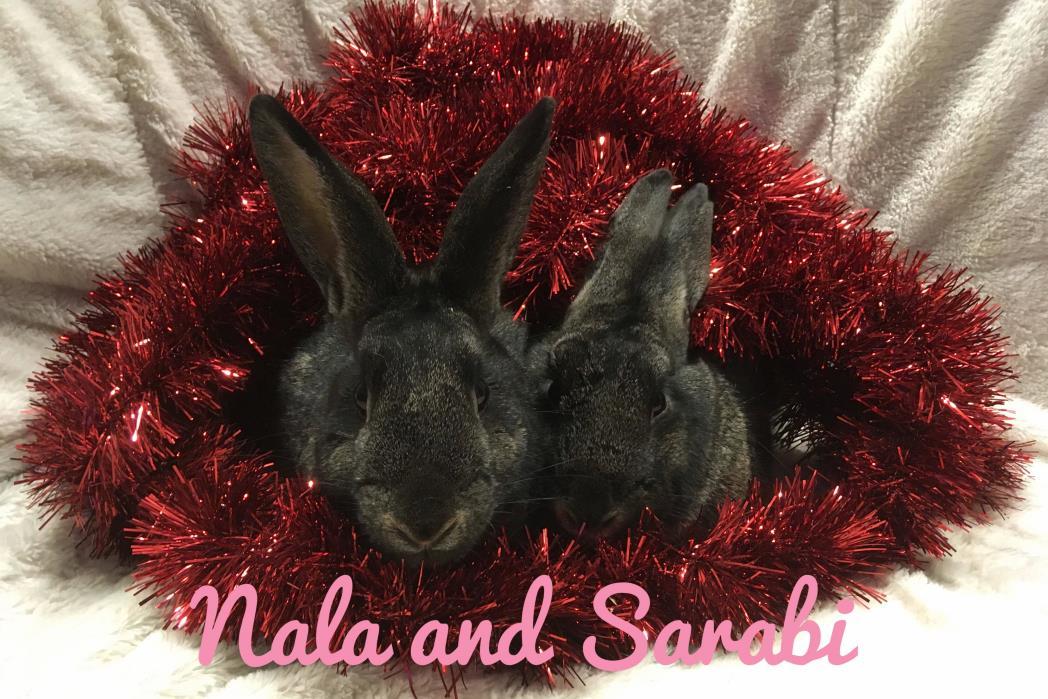 Adopt Nala and Sarabi a Bunny Rabbit