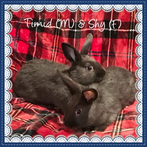 Adopt Timid and Sky a Other/Unknown / Mixed rabbit in Idaho Falls, ID (20540577)