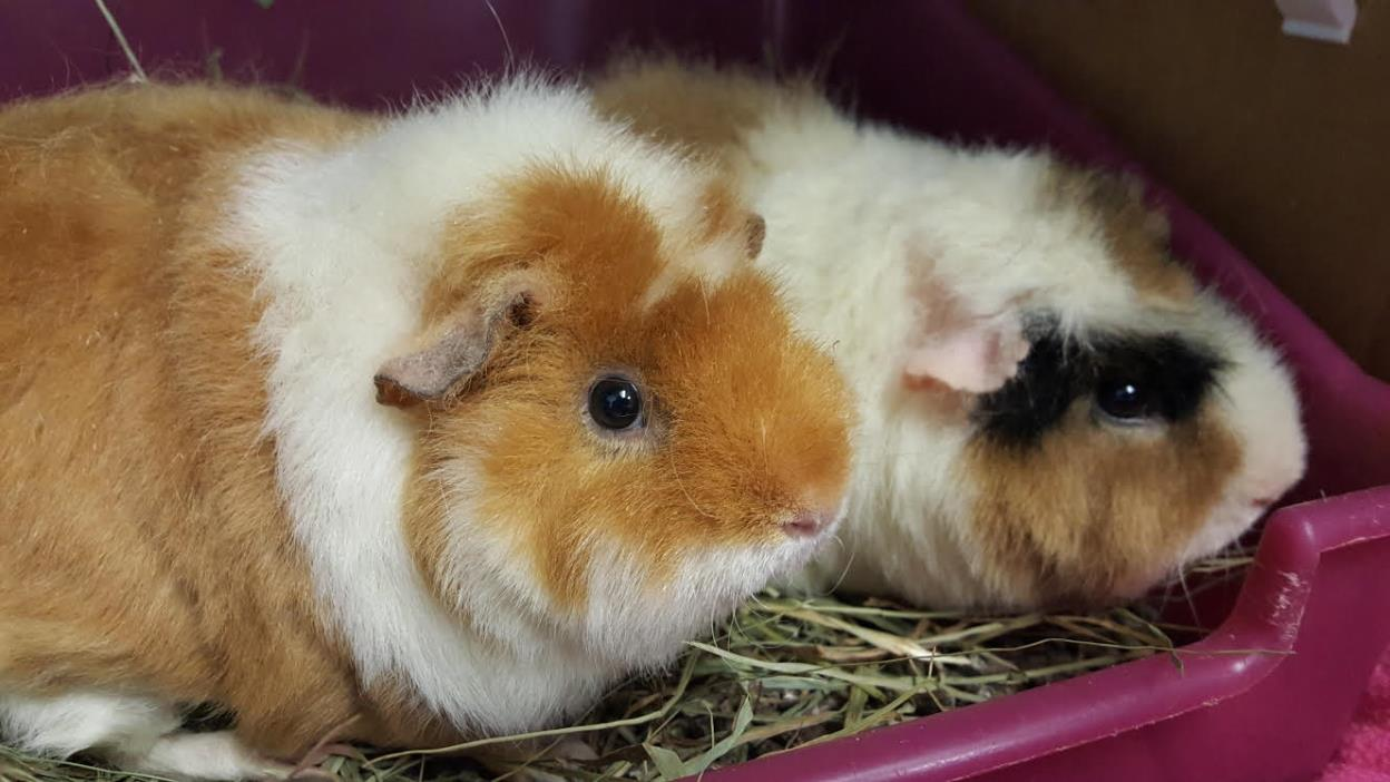 Adopt Blossom & Bubbles a Teddy