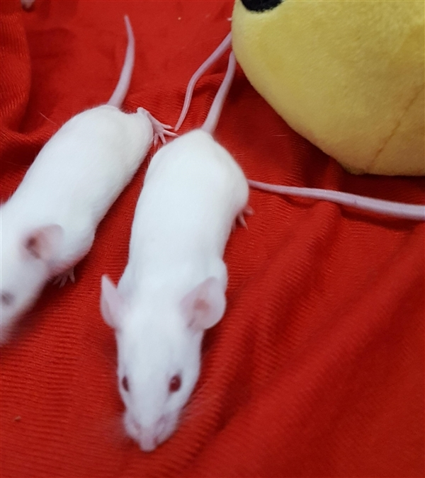 Adopt Thumbelina a Mouse