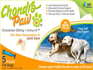 Answer to Dog Arthritis Worry - Natural Help, Awesome Result