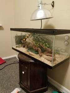 ball python with tons of accessories (Springdale)