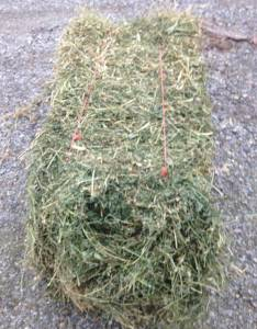 Alfalfa Hay bales (Richwood)