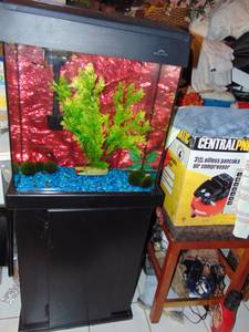 20 Galllon Fish Tank with Stand and Fish