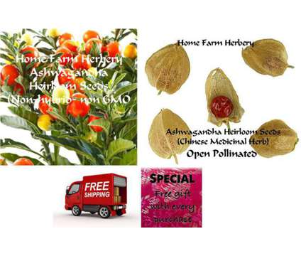 Ashwagandha Heirloom Seeds, Order now, FREE shipping & a free gift
